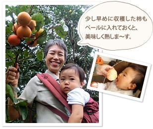 少し早めに収穫した柿もペールに入れておくと、美味しく熟しま~す。